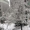 终于下雪啦