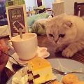 猫咖里的馋猫