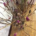 老公买回来的枯树枝