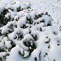下了一夜的雪