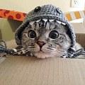 最近画的彩铅猫咪
