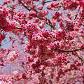 春天里那个百花开,啷哩个啷哩个啷!