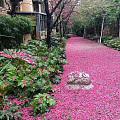 春欲暮,满地落花红带雨。