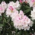 美美的花儿