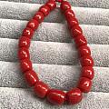天然红珊瑚-沙丁