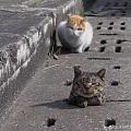 猫咪卡住之后。。。