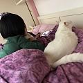 头疼,因为猫的问题跟老公有分歧。
