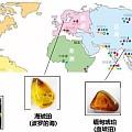 一文看懂全球四大产地的蜜蜡特点