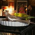 小鸟儿们繁忙的晚餐