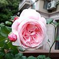 花香袭人暖家的花