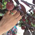 老家的樱桃好甜