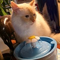 喵喵喵,小白喝水