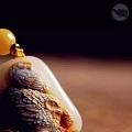 值得一看:和田玉的10种:雕刻绝技