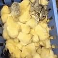 发一张小鸡鸡在咪咪上的动图
