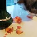 小花瓶,小花鐲
