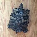 被我家的乌龟打扰啦