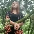 [转帖分享] 女子偷荔枝被绑树上示众,羞于见人当场嚎啕大哭