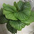 我家的绿植,看着心情就好,哈哈