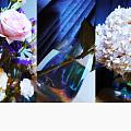 新购入一批花