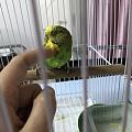 撸鸟撸到变形