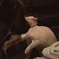 这是一只掌握了摸头杀的狗子