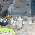 隔着玻璃的橘猫