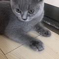 猫咪得了猫鼻支