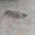 小狗喜欢睡瓷砖,不行吧?
