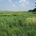 绿油油的大草原就是风景,采蘑菇,野外烧烤