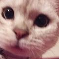 猫咪自拍~~