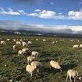 祁连山脉大草原与天空无限接近的地方