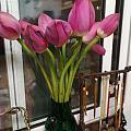 一天的美好,从鲜花绽放开始