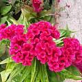 蓝天白云红花