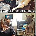养狗子的朋友,你家狗子有什么爱好