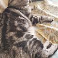如何给猫减肥