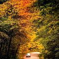 枫叶国最美的时刻