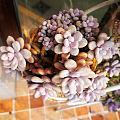 秋天是温柔的颜色,晒晒我爱的大桃蛋