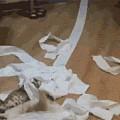 《惊呼!孤男寡女同房用了一卷纸!累瘫不起!》
