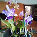 藍紫蘭花和紫藍玉髓