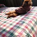 喜欢狗达到了一定的境界,总是要抱着它,睡觉也想搂着,几天不洗澡也没觉得嫌弃,...