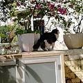 阳光小院与猫