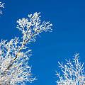 寒冷冬天我们的橄榄核雕需要注意什么呢