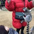 新年第一天,动物园喂喂猴子