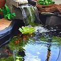 庭院.鱼池
