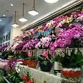 前两天去花卉市场逛了逛,现在花好贵呀,还是因为过年前要赚一票的关系。打算年后...