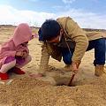 从沙子里挖出来的小螃蟹叫什么