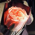 嗯 没错😸这就是购物赠送的 一枝花也是花🌹你们同不同意呀