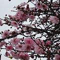 今天散步拍的花请大家欣赏🤗😀