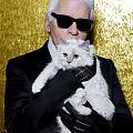 世上最富有的貓···《最新消息 》 時尚老佛爺近10億人民幣遺產全部留給牠!...