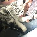 猫猫打针 请教一下坛子里的养猫达人们,猫咪二个月了是否应该打针了?咨询了几家...